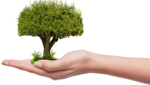 Ecologie entre nos mains